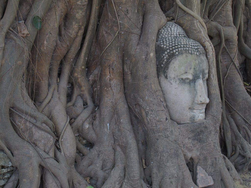 This single Buddha head makes Ayutthaya the most famous of all day trips from Bangkok.