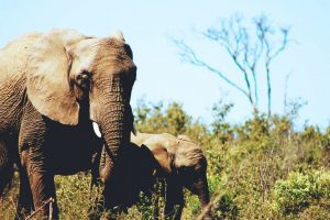 Ethical elephant sanctuaries in Thailand for the conscious traveler