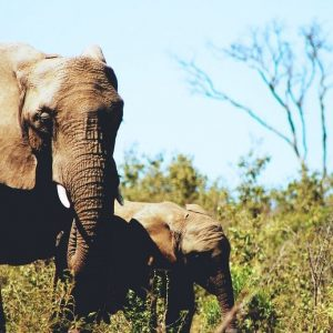 6 Ethical Elephant Sanctuaries to Visit in Thailand
