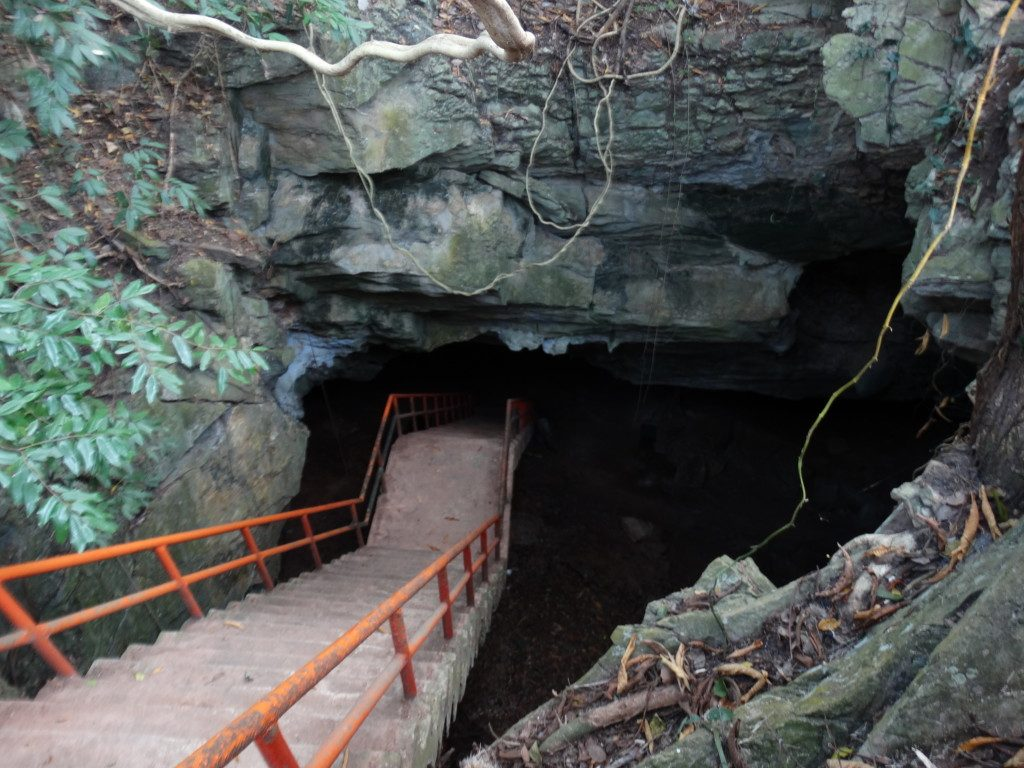 If spelunking is your forte, there are several bat caves to explore in Khao Yai National Park.