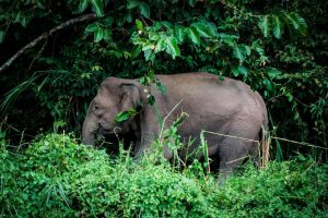 the best ethical animal sanctuaries in thailand