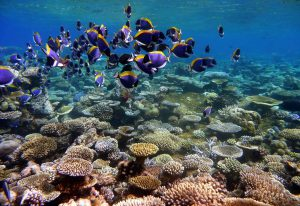 Thailand's coral reefs are in danger.