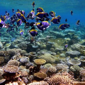 Bringing Thailand's Coral Reefs Back to Life: A Shockingly Good Idea