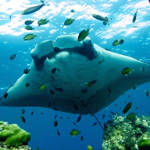 Exploring the Underworld: 6 of the best dive sites in Thailand