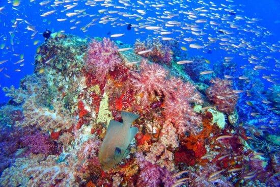 Best dive sites in thailand hin daeng soft red coral