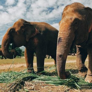 READ THIS BEFORE VISITING AN <br> ELEPHANT SANCTUARY IN THAILAND